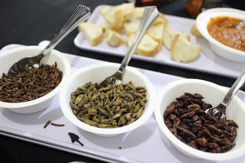 インセクト(昆虫)を使った食のデモンストレーション